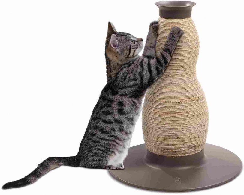 Котенок точит когти