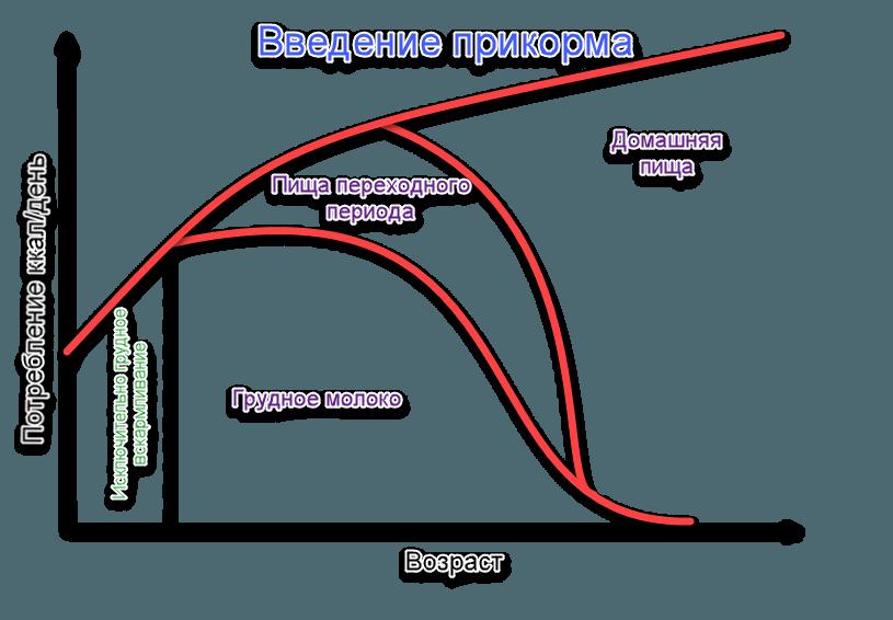 Этапы введения прикорма