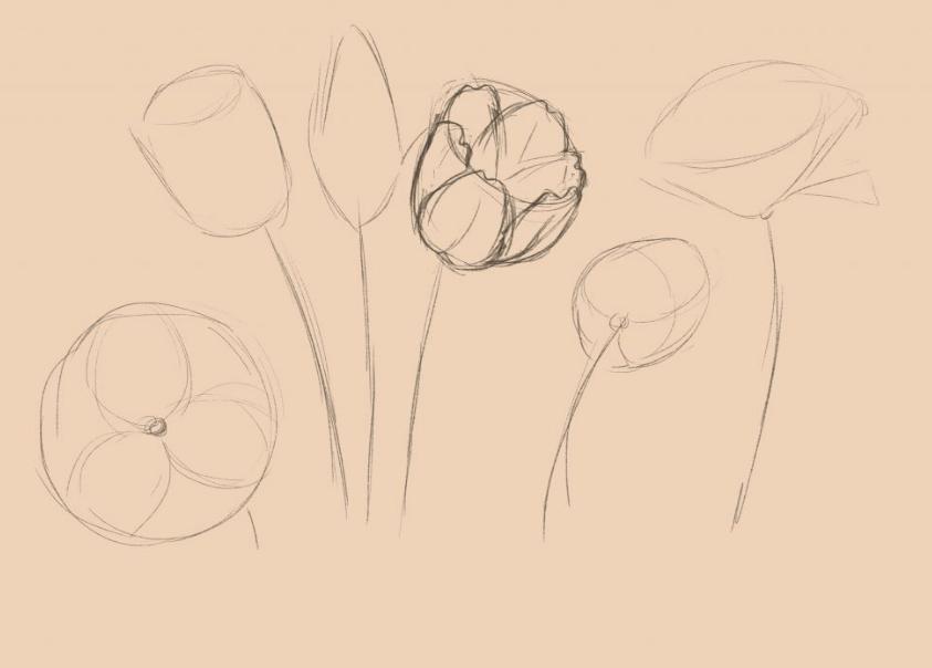 Начните прорисовывать цветки