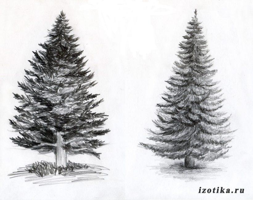 elki-ris-821x650 Как научиться рисовать