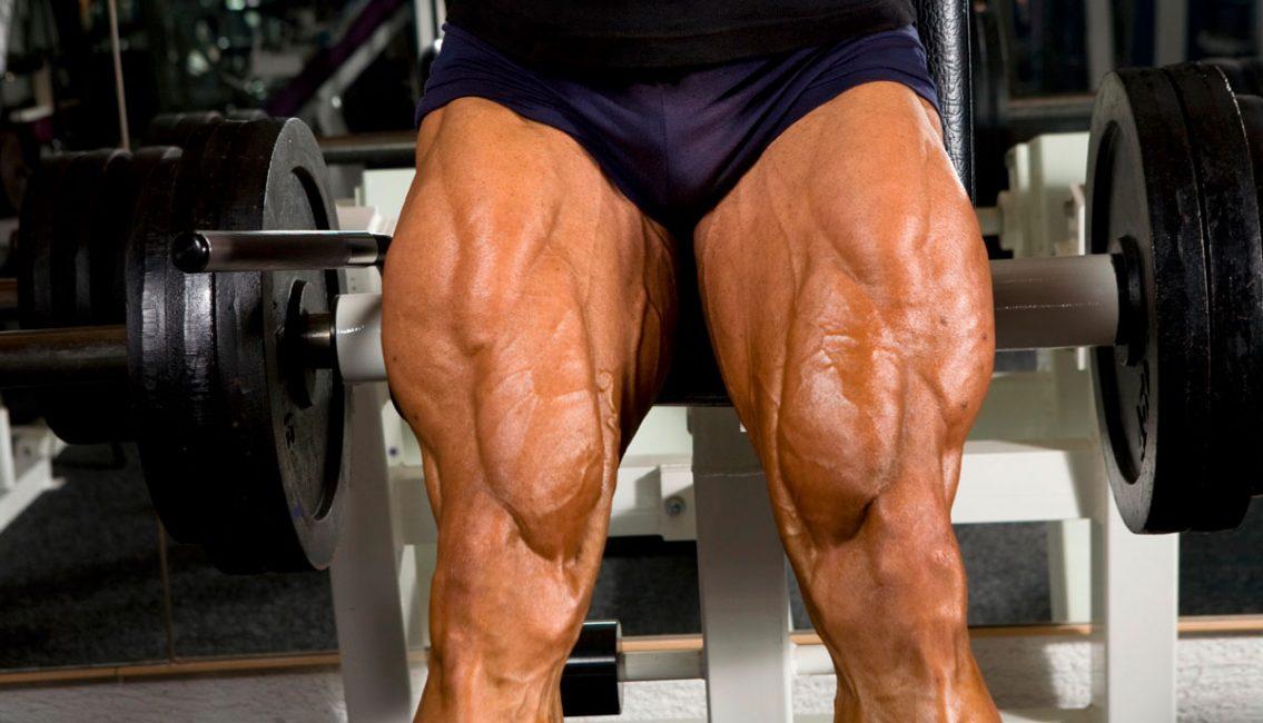 Квадрицепс — очень развитая группа мышц