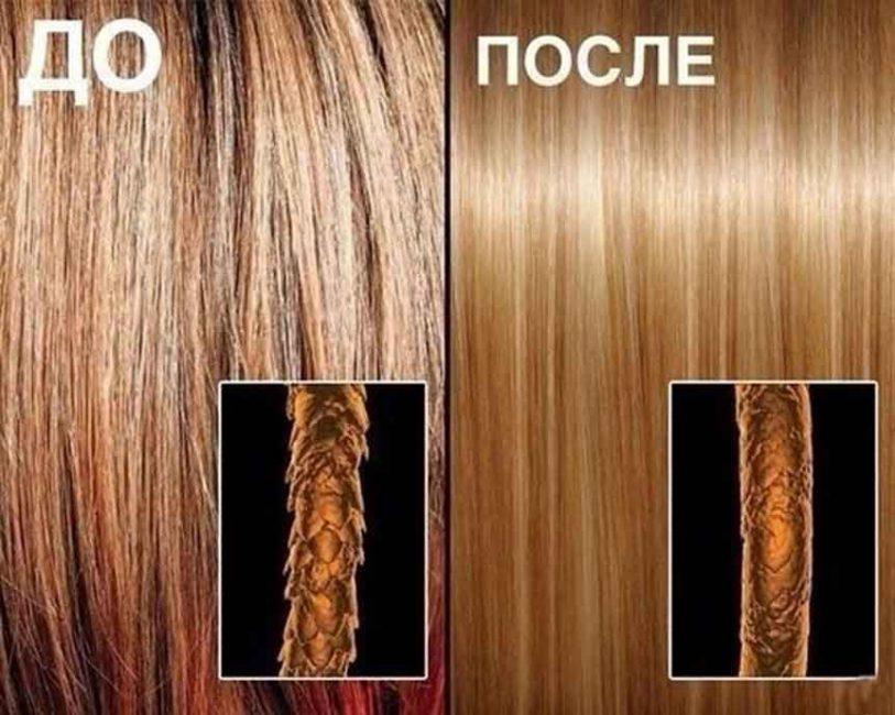 Влияние масла зародышей пшеницы на структуру волоса