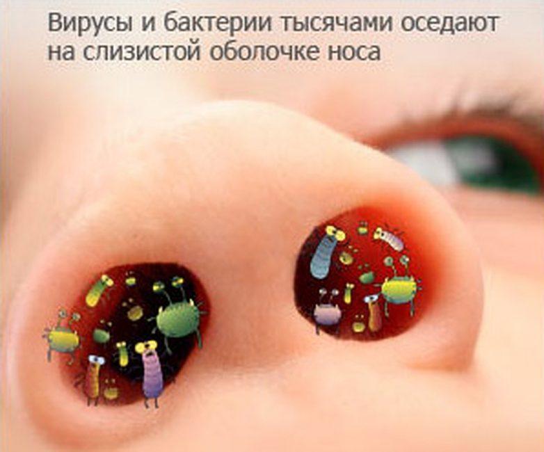 Вирусы и бактерии способны оседать на слизистой носа и носоглотки
