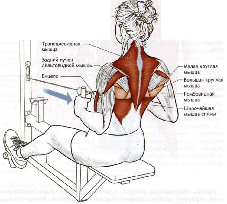 Укрепление грудных мышц