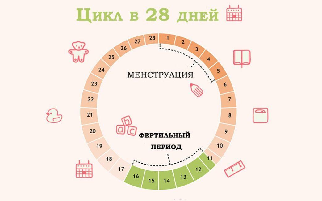 Менструальный цикл. Зеленым цветом выделен период овуляции.