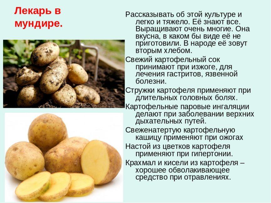 Лечебный картофель