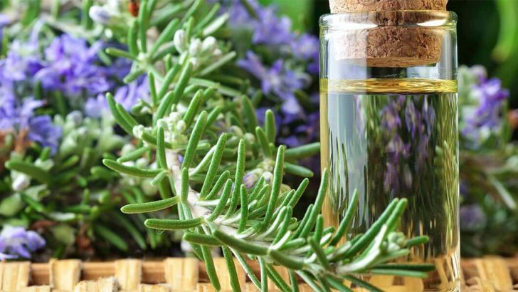 Оказывается, что розмарин замечателен тем, что в его состав входят эфирные масла, стимулирующие рост волос