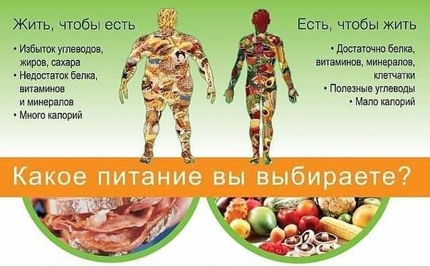 Мы едим для того, чтобы жить, а не живём для того, чтобы есть