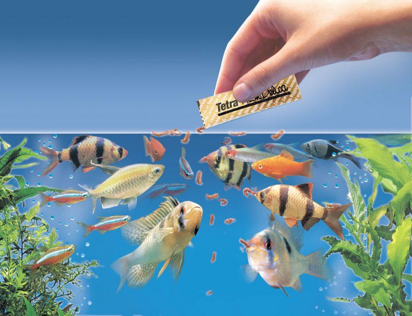 Кормить рыбу во сне — к долгам