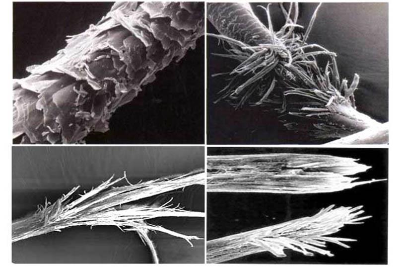 Повреждения волос под микроскопом