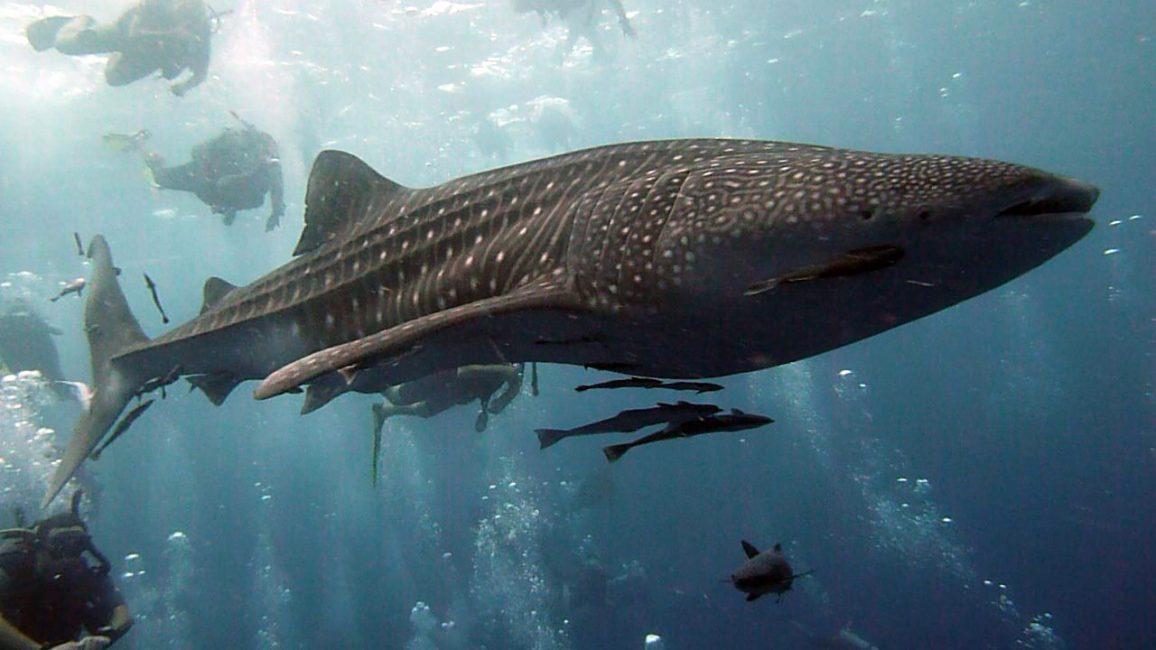 Большая рыба во сне предвещает исполнения всего начатого