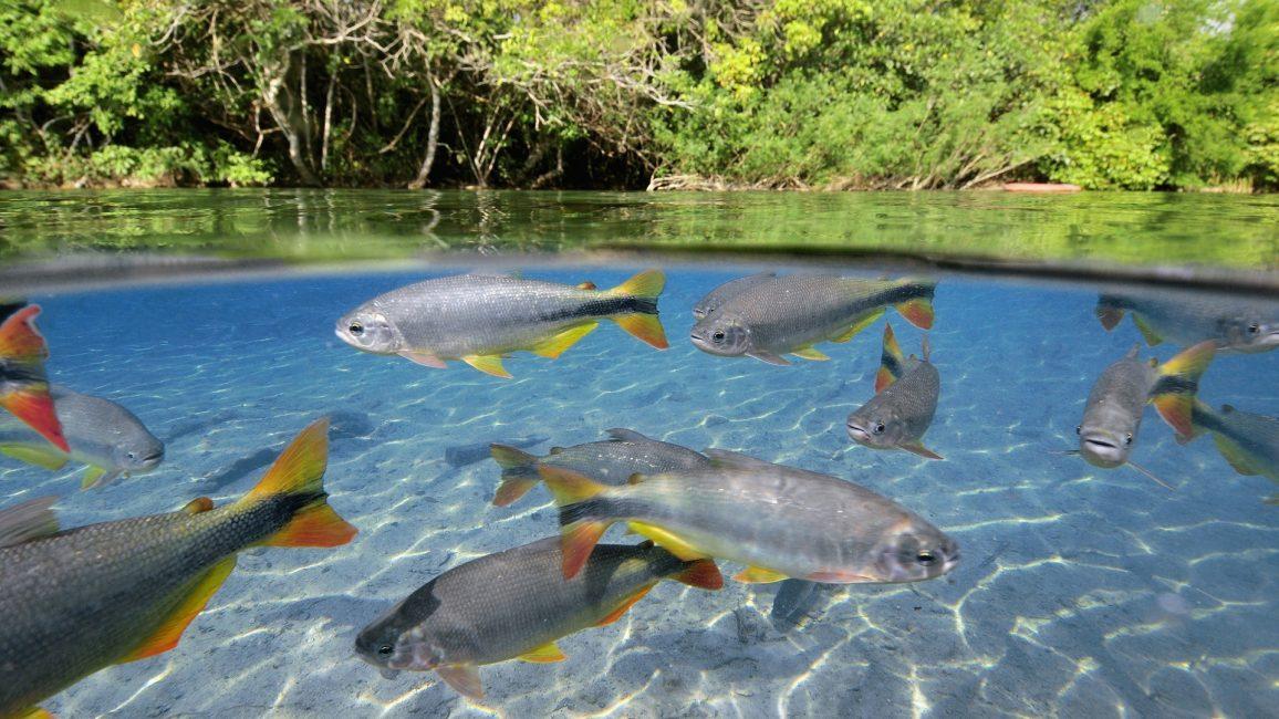 Рыба плавает в озере - дорога к познанию бессознательной активности психики.