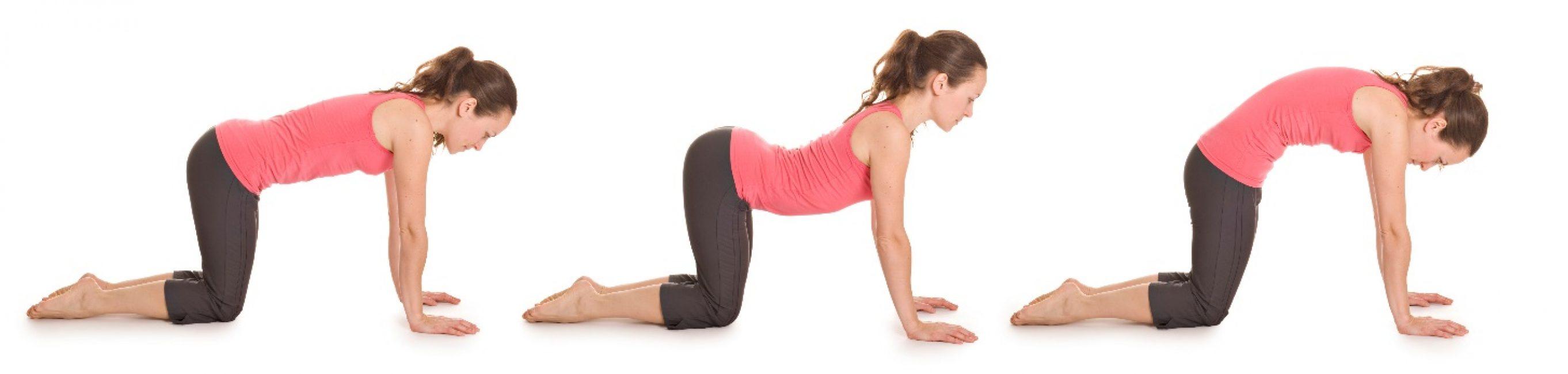 Упражнение «Кошка» помогает в устранении боли в позвоночнике, животе и груди