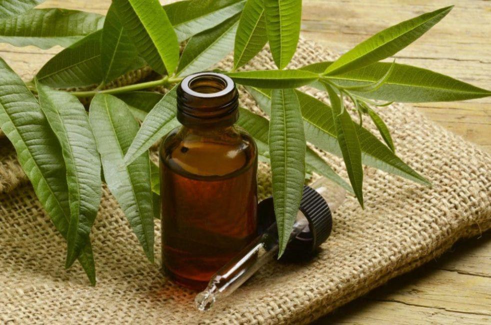 Масло чайного дерева эффективно в лечении мозолей вызванных грибком