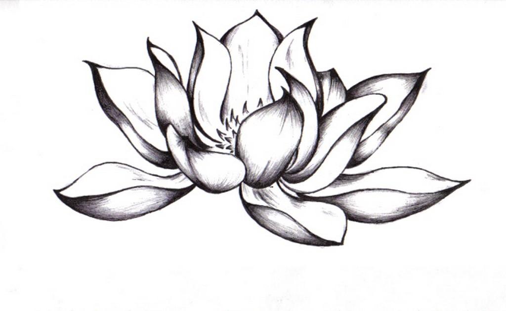 Лотосовый цветок эскиз для татуировки