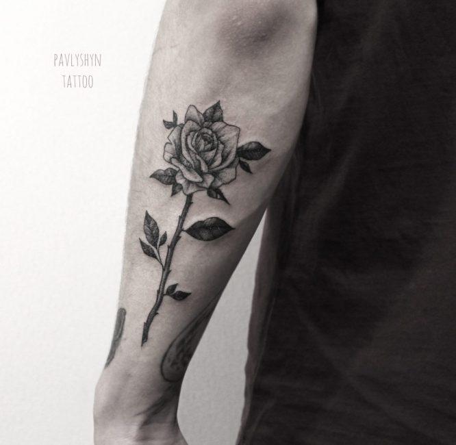Роза с шипами