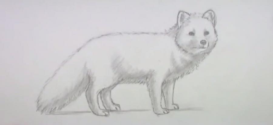 Готовый рисунок