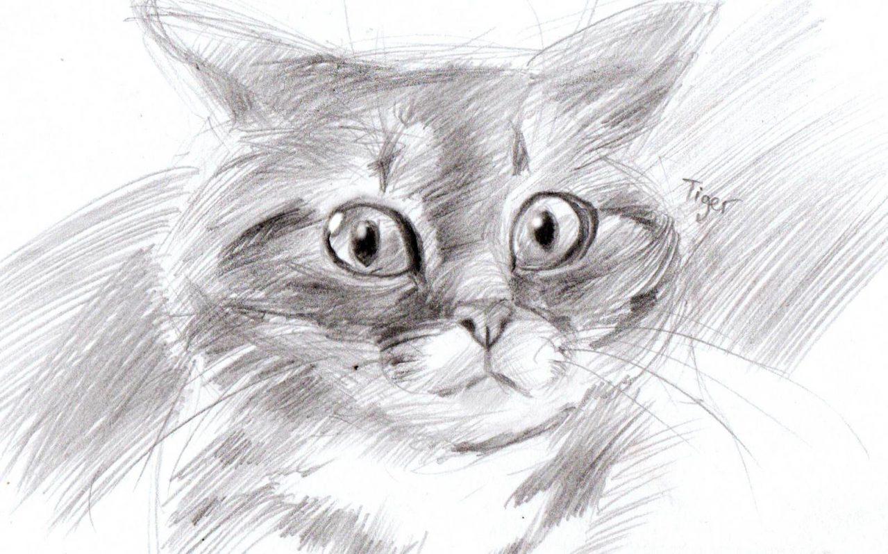 Как нарисовать кошку обучение