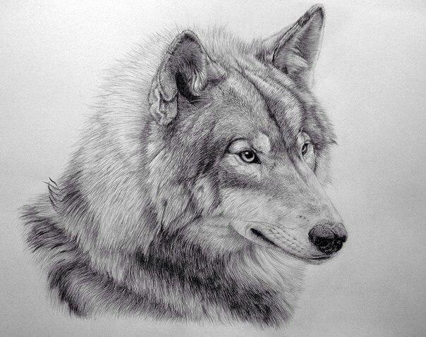 На рисунке отчетлива видна плотность линий в изображении шерсти собаки. Четкие и слабые линии помогают увидеть красоту шерсти, ее здоровый вид
