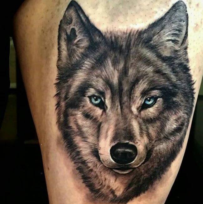 Волк в стиле реализм