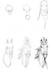 Красивые рисунки животных карандашом: простые, для детей, срисовки. Медведь, слон, лиса. Мастер-классы для начинающих + 105 ФОТО