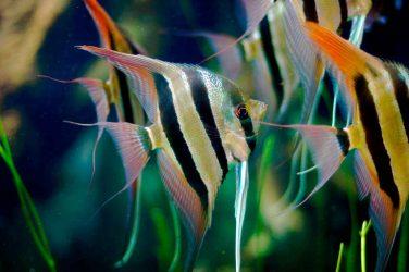 Виды и совместимость аквариумных рыбок. ТОП-5 популярных рыб для начинающих + 165 ФОТО